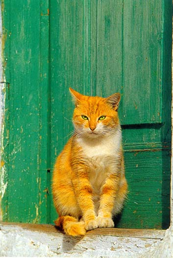 http://webgrece.free.fr/images/chats/postcards/carte_chat_fond_vert.jpg