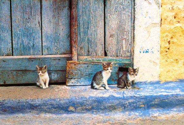 http://webgrece.free.fr/images/chats/postcards/chatons_carte_postale.jpg