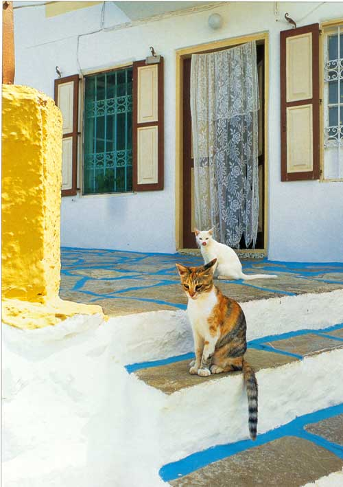 http://webgrece.free.fr/images/chats/postcards/chats_rue_typique.jpg