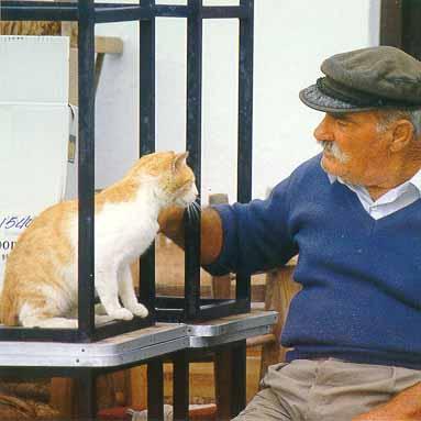 http://webgrece.free.fr/images/chats/postcards/homme_au_chat.jpg