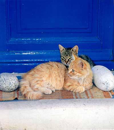http://webgrece.free.fr/images/chats/postcards/repos_porte_bleue.jpg